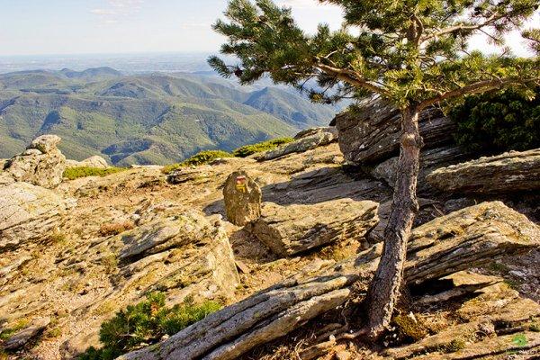 Randonnée Plateaux du Caroux